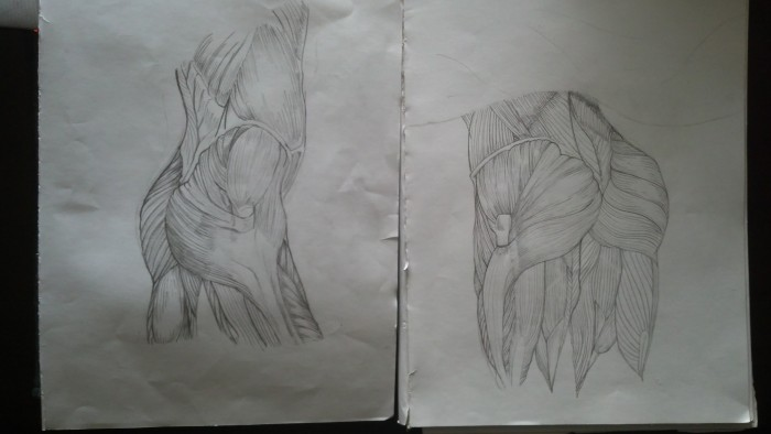 glute sketches